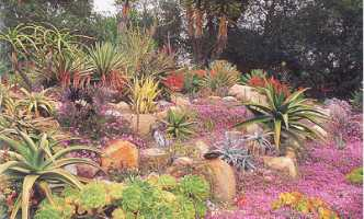 A Colourful Desert Southwest Garden Combining Xeriscaped Specimens Of  Succulents U0026 Cact!
